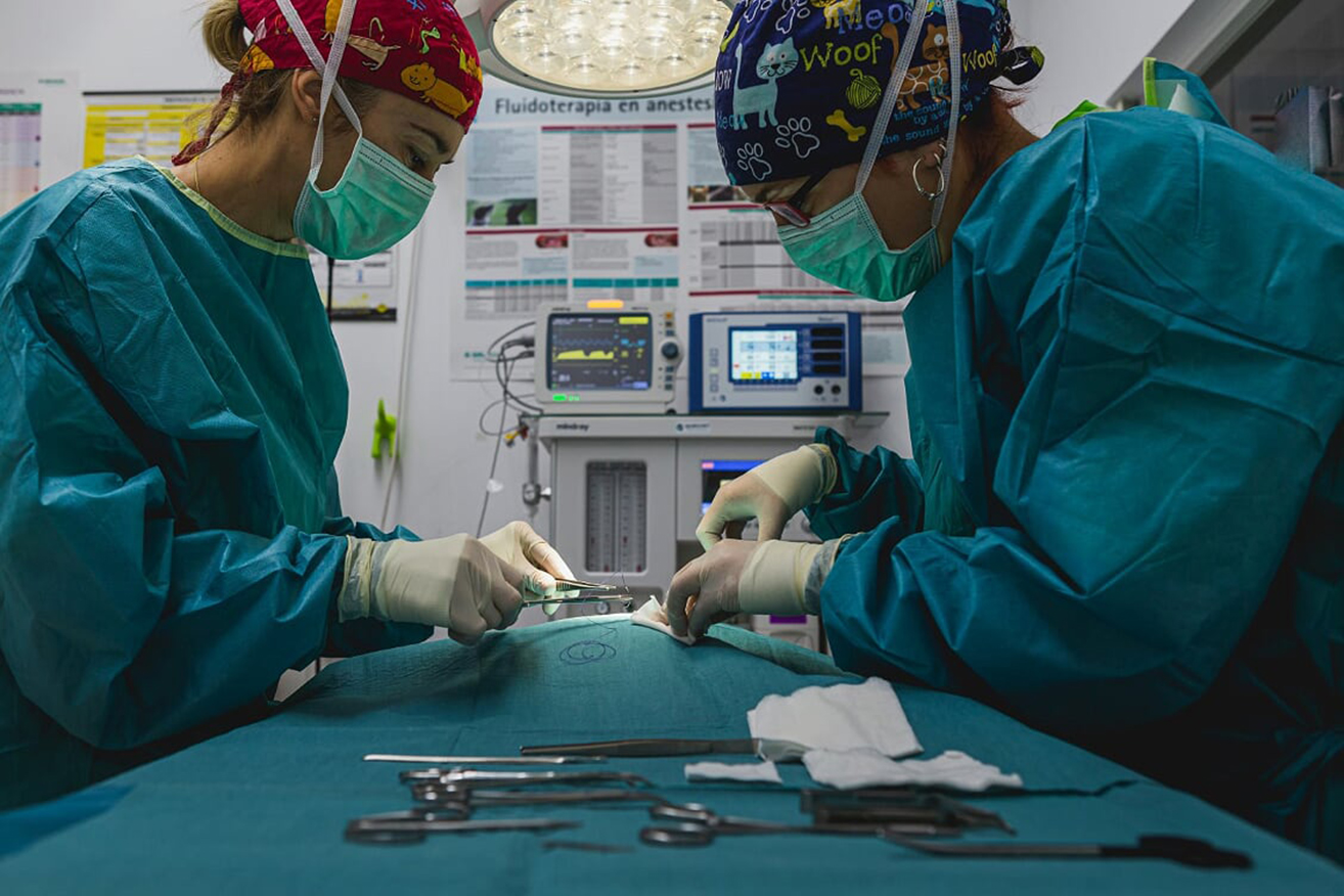 hero operatorio clinica veterinaria bichos